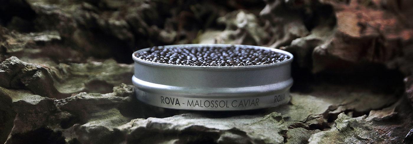 royal_de_luxe_rova_caviar_madagascar