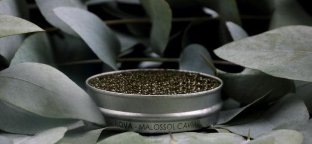 Rova Caviar Suprême