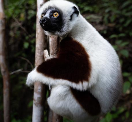 Engagement Environnemental Lemurien